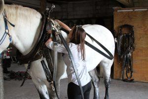 Kate-Mason-Dennis-Horse-Austin
