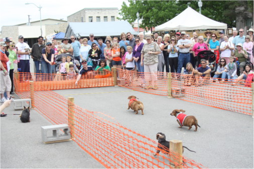 Burnet Bluebonnet Festival Weiner Dog Races