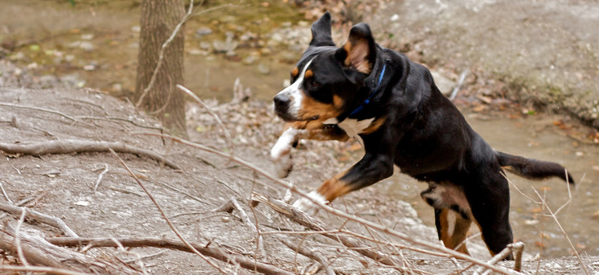 Most Mellow Dog Breeds - Walnut Creek Images, Pictures, Photos, Icons ...