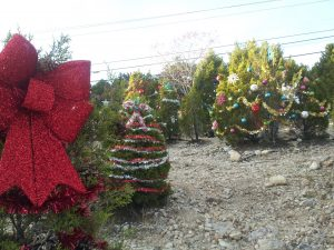 Capital of Texas Tree Decorating