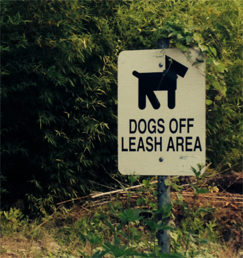 Austin Dog Off Leash Area