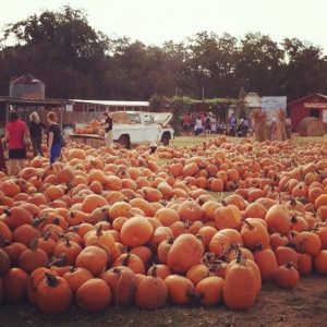 Sweet Berry Farm Pumpkins Near Austin