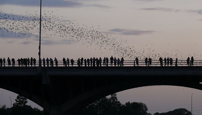 Austin Bat Flight with Congress Bridge