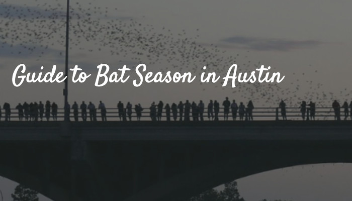 Guide to Bat Season in Austin