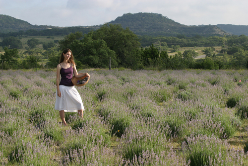 Tasha Brieger Hill Country Lavender Owner