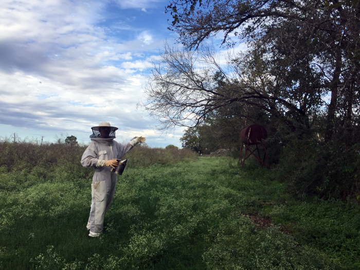 Beesuit at CrownFox Farms
