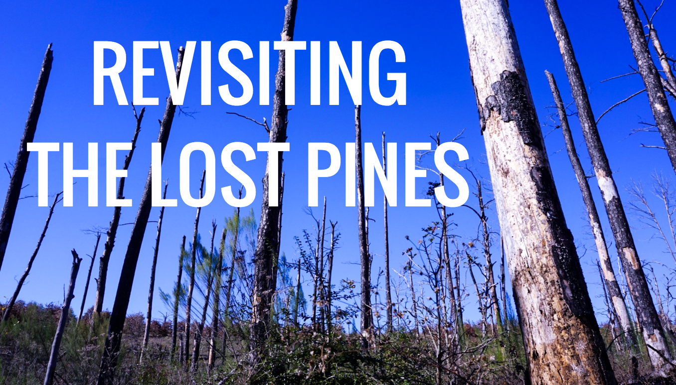 Lost Pines Texas