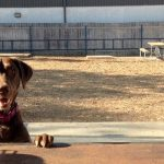 Yard Bar Creates Dream Playground for Doggies and Their Owners