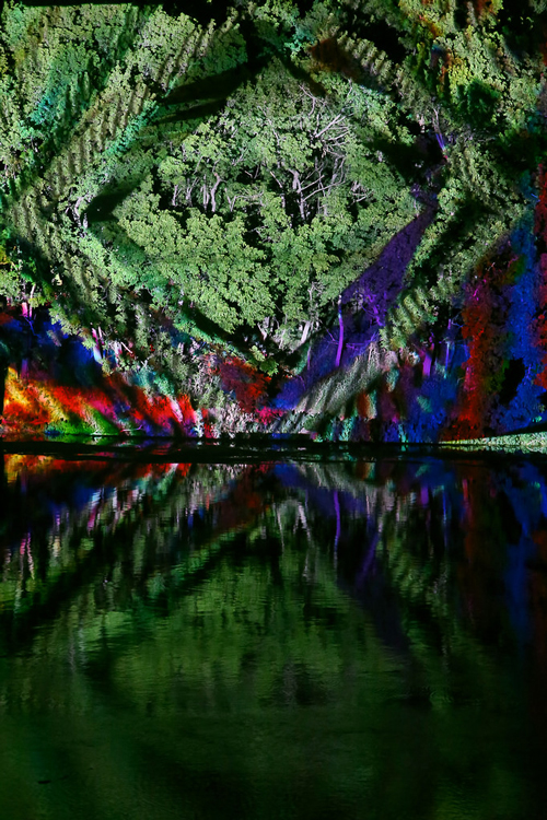 Colorful Tree Projection at Levitation Festival