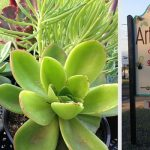 Articulture Designs Unites Plant Life With Home Decor in Austin