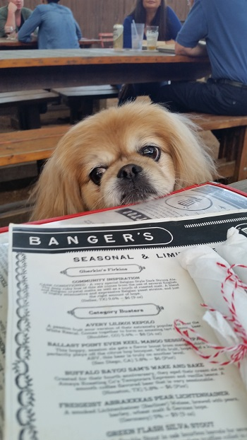 Dog Friendly Banger's Sausage House