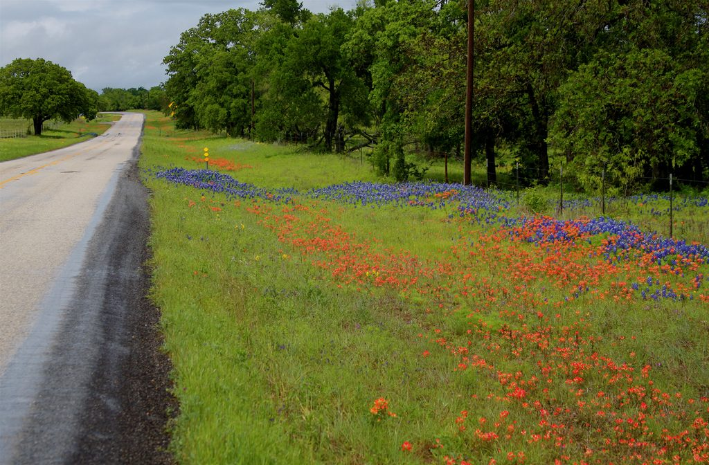 Texas Hill Country Roadside