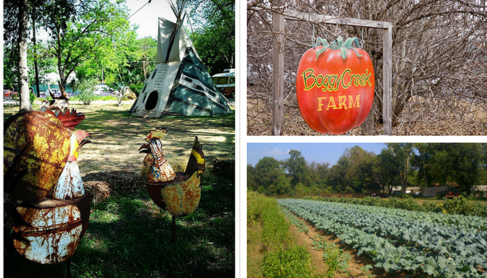 Rain Lily Farm and Boggy Creek Farm
