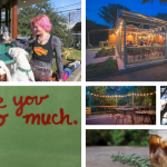 The 10 Most Inviting South Austin Coffee Shops