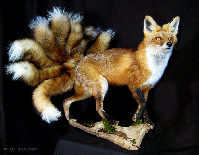 Nine-Tailed Fox Weird City Taxidermy in Austin