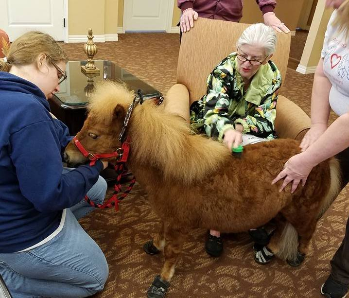 Mini and Friends Therapy With Senior Citizen