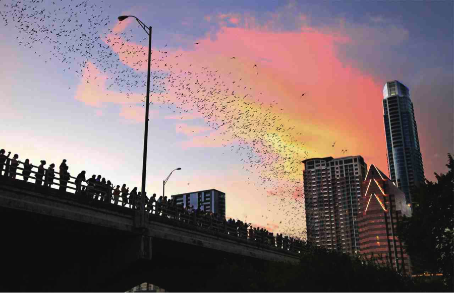 Bats Emerging from Congress Avenue Bridge