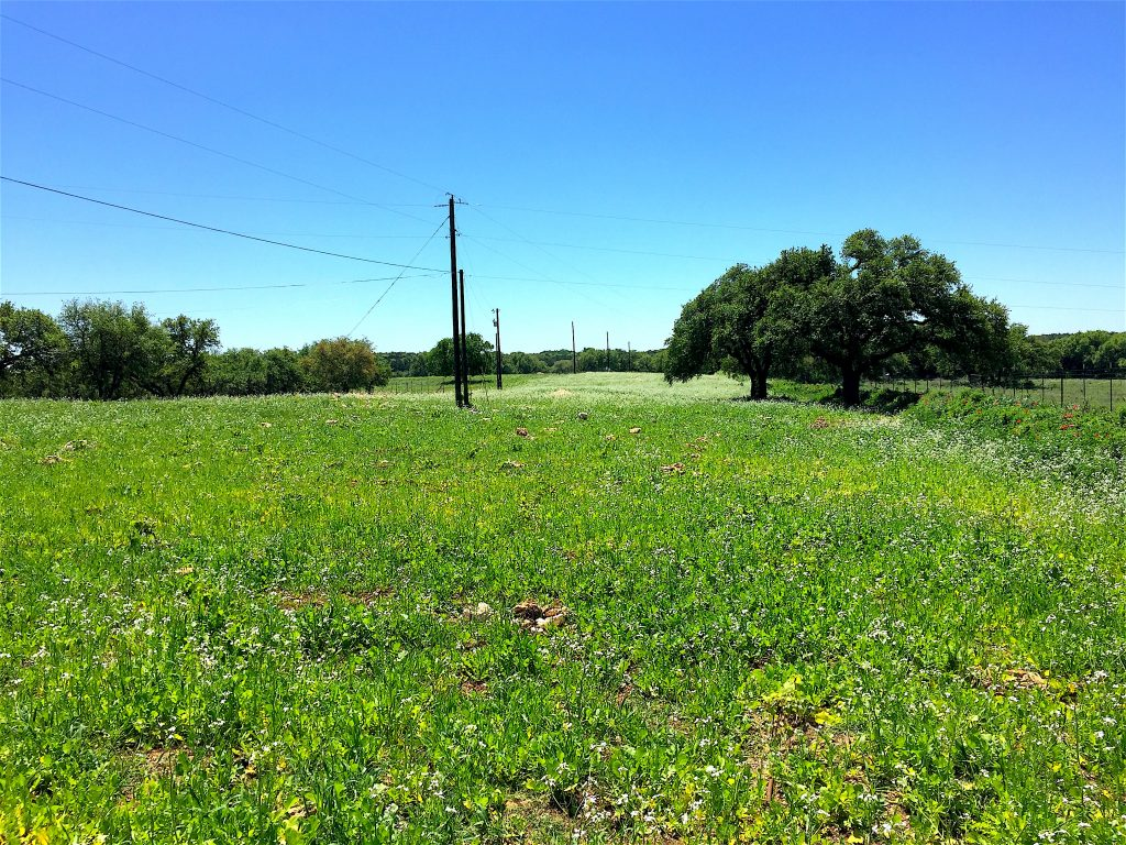 Three acres of vineyard at Jester King Brewery