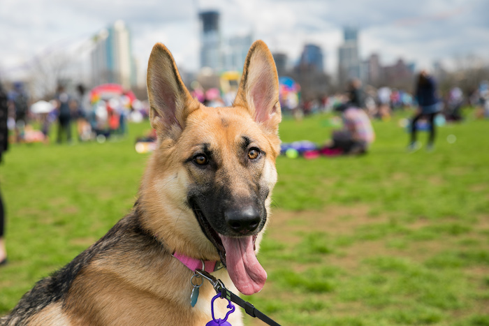 Pet Zone for Dogs at ABC Kite Fest