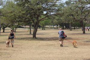 Playing disc golf with dogs at Zilker Park