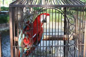 Horseshoe Bay Resort is Home to 30 Exotic Birds