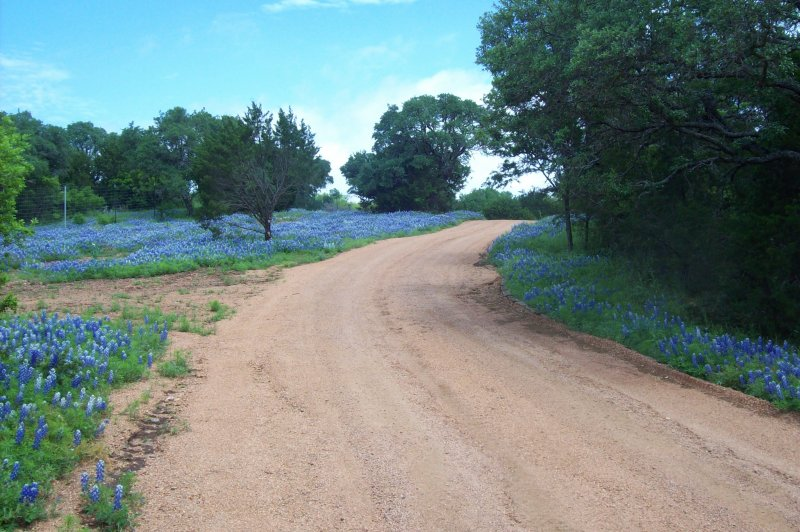 Bluebonnets at Reveille Peak Ranch