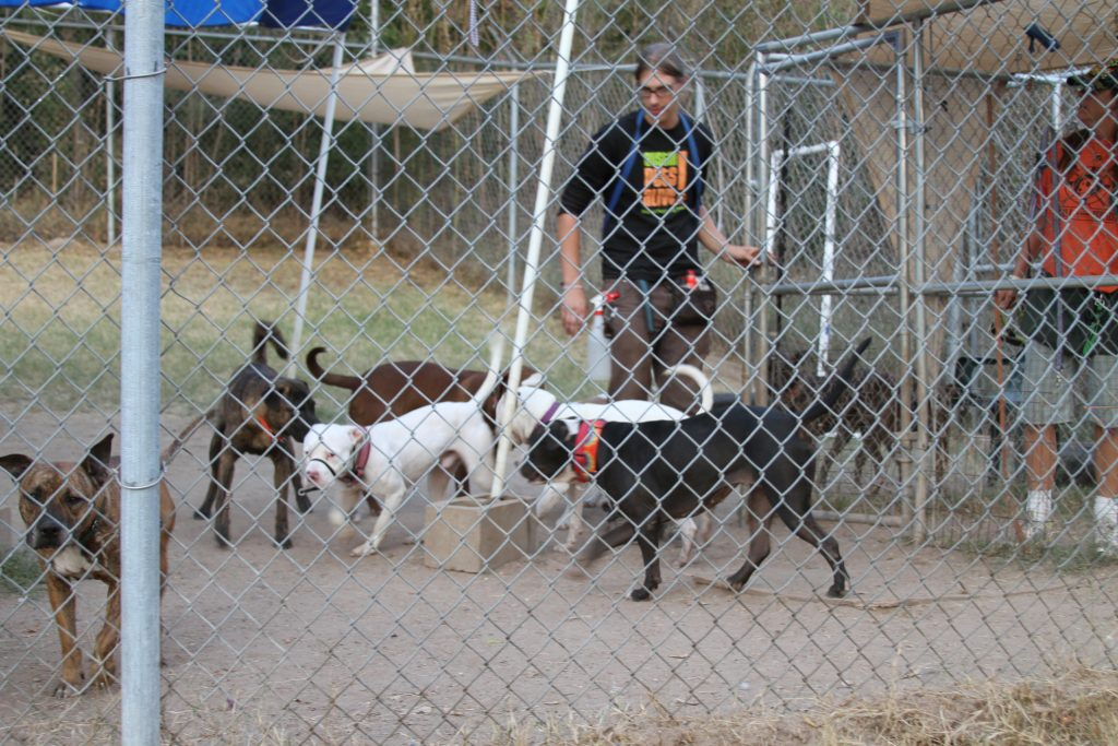 Austin Pets Alive Behavioral Dog Program