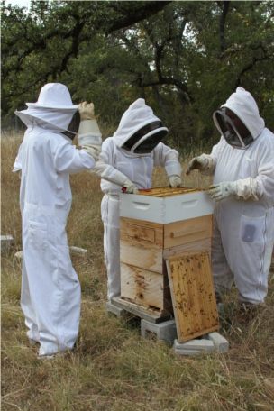 Beekeepers Access a Bee Hive at Round Rock Honey