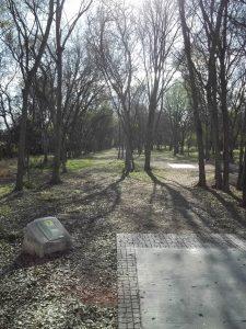 Roy G Guerrero Disc Golf Course Hole