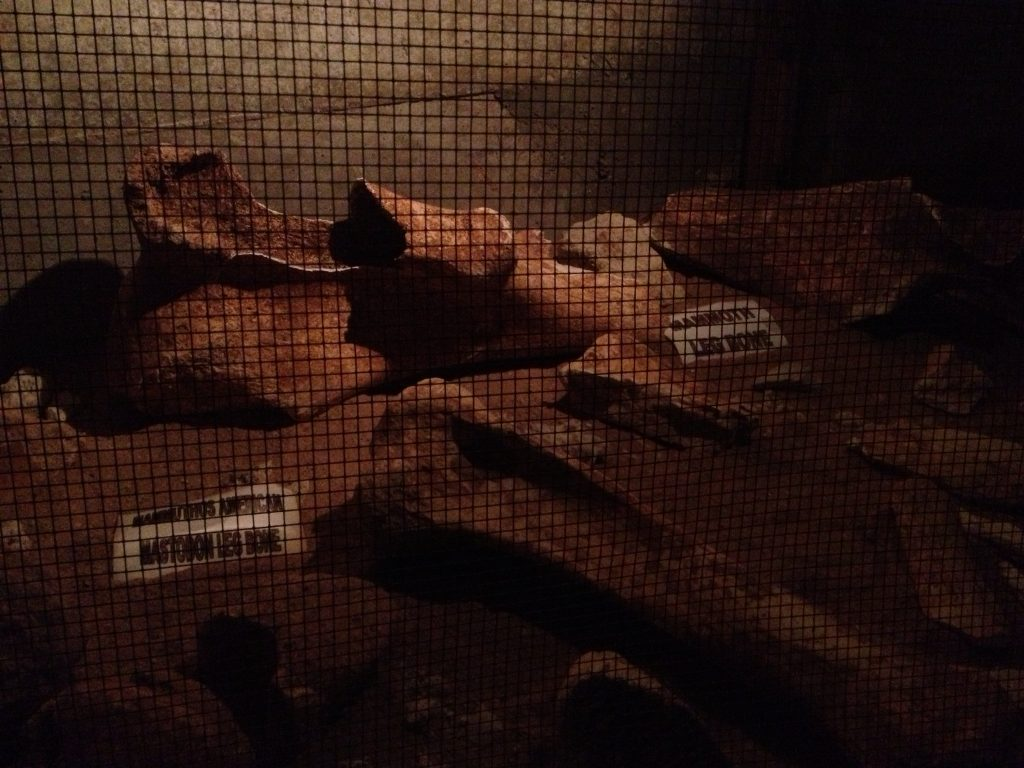 Fossils at Inner Space Caverns