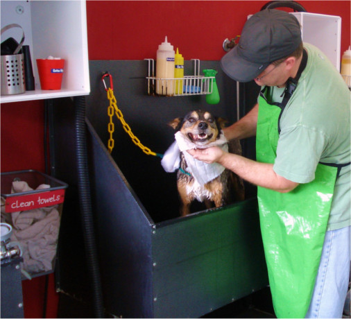 DIY Dog Wash at Dirty Dog