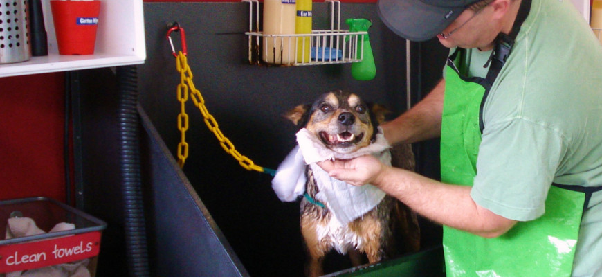 Diy or drop off dirty dog grooming and self serve dog wash solutioingenieria Images