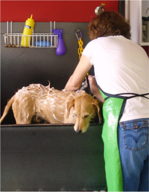 DIY dog wash at Dirty Dog Austin