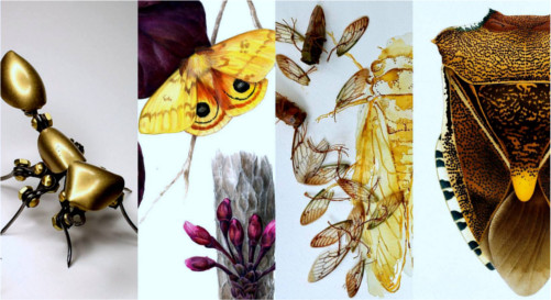 Insect Inspired Artwork at Art Science Gallery