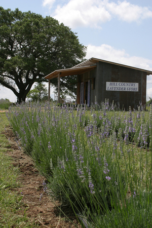 Hill Country Lavender Store