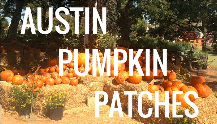 Red Barn Garden Center Pumpkin Patch in Austin