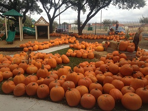St. John's United Methodist Church pumpkin patch