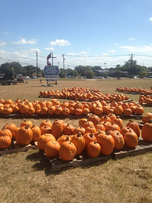 St. Mark United Methodist Church Pumpkin Patch
