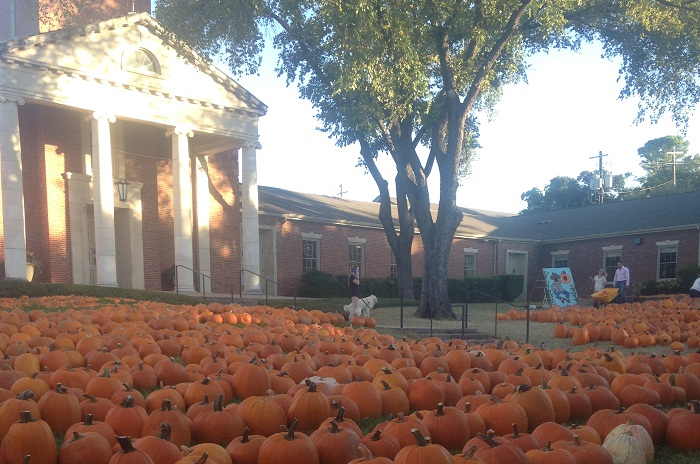 Tarrytown United Methodist Church Pumpkin Patch