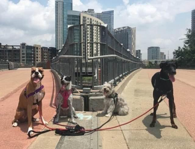 BarkHappy App Dog Play Dates in Austin