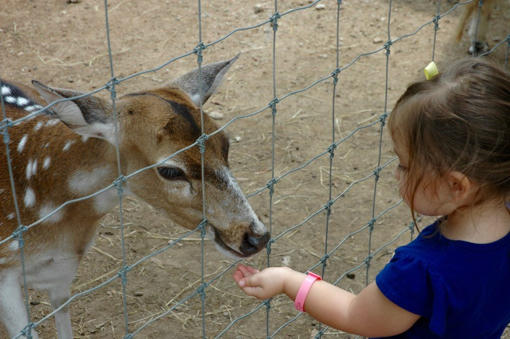 Feeding Deer at Austin Zoo