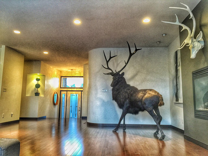The Black Stag Full Body Taxidermy