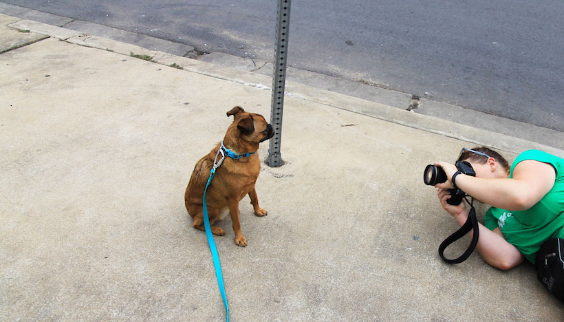 austin dog photographers