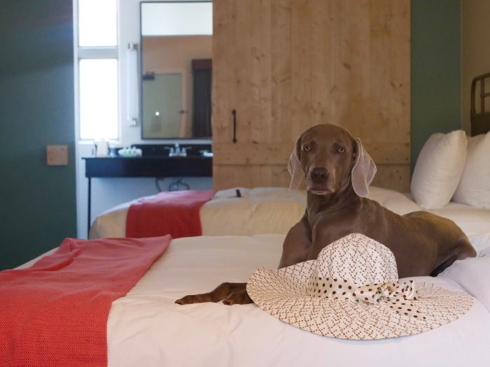 Dog-friendly Austin Hotel