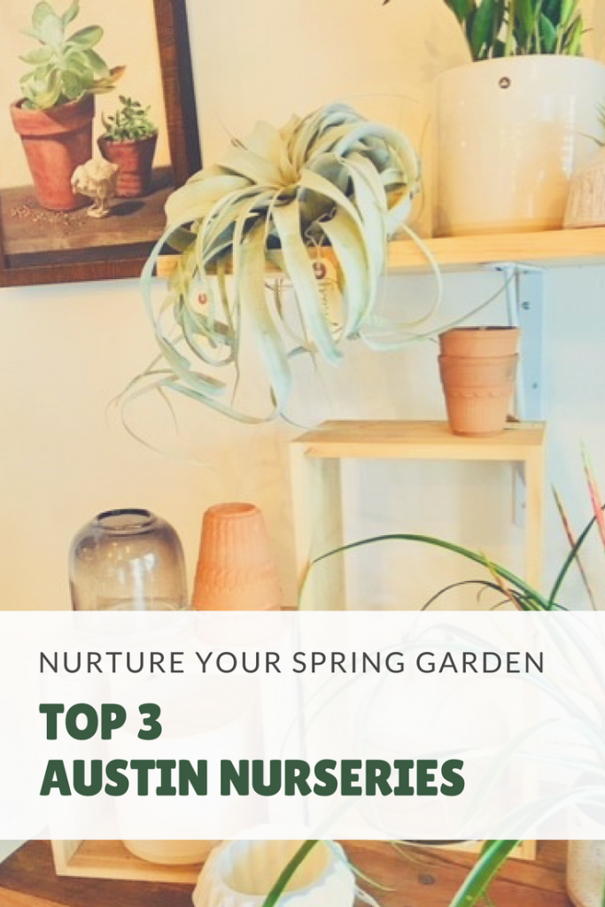 Best Austin Nurseries Spring Gardening