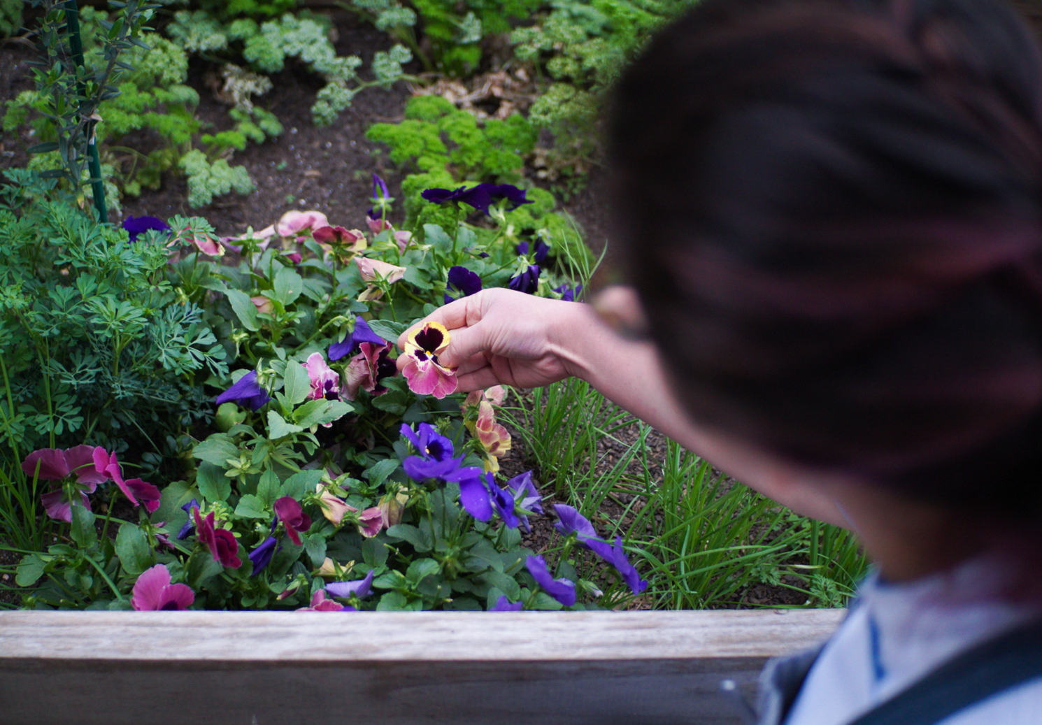 Emmer & Rye Garden With Edible Flowers