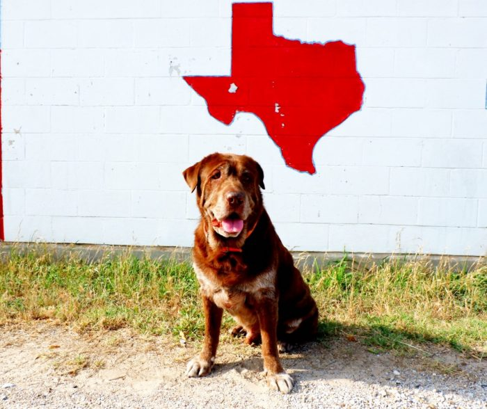 Best Austin Animal Shelters