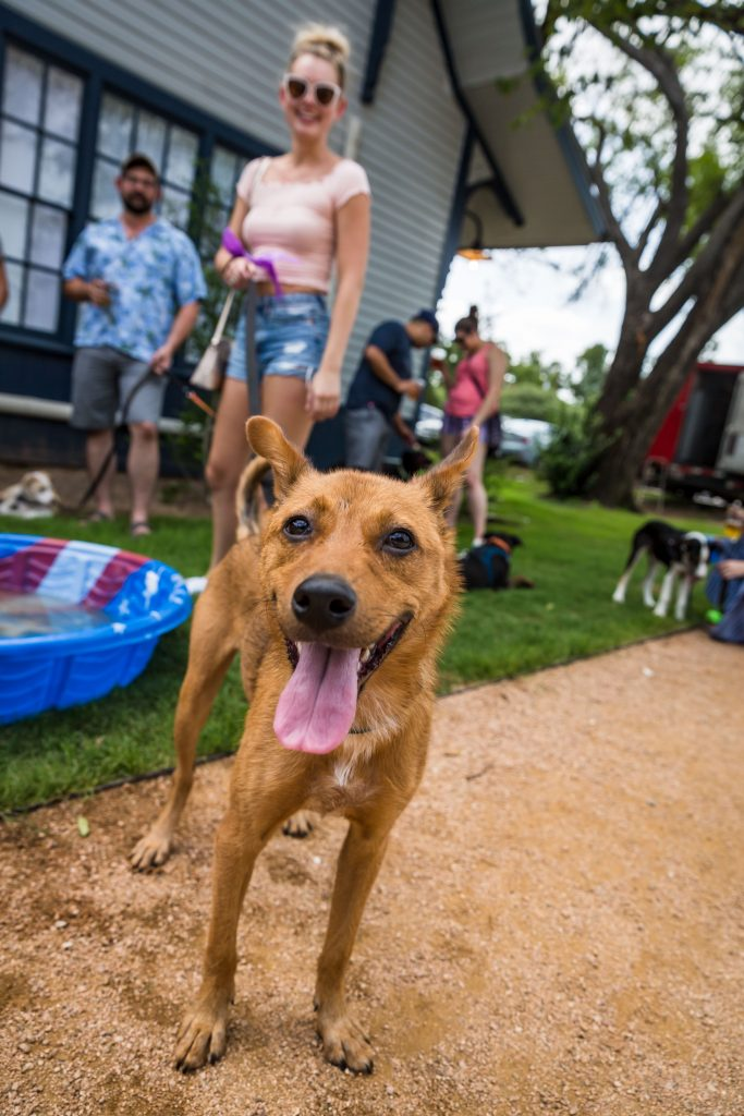 Austin Social Event for Dogs