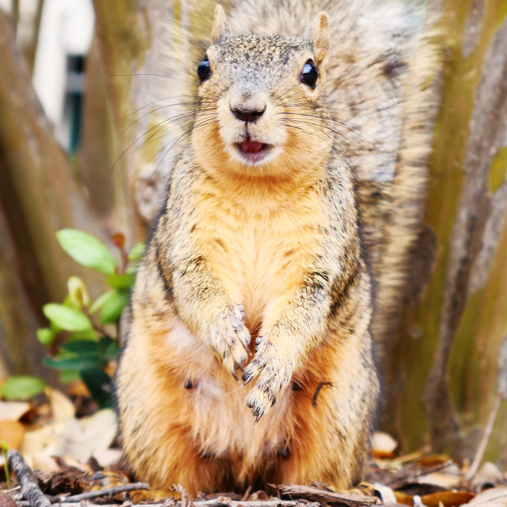 Squirrels of UT Austin Book