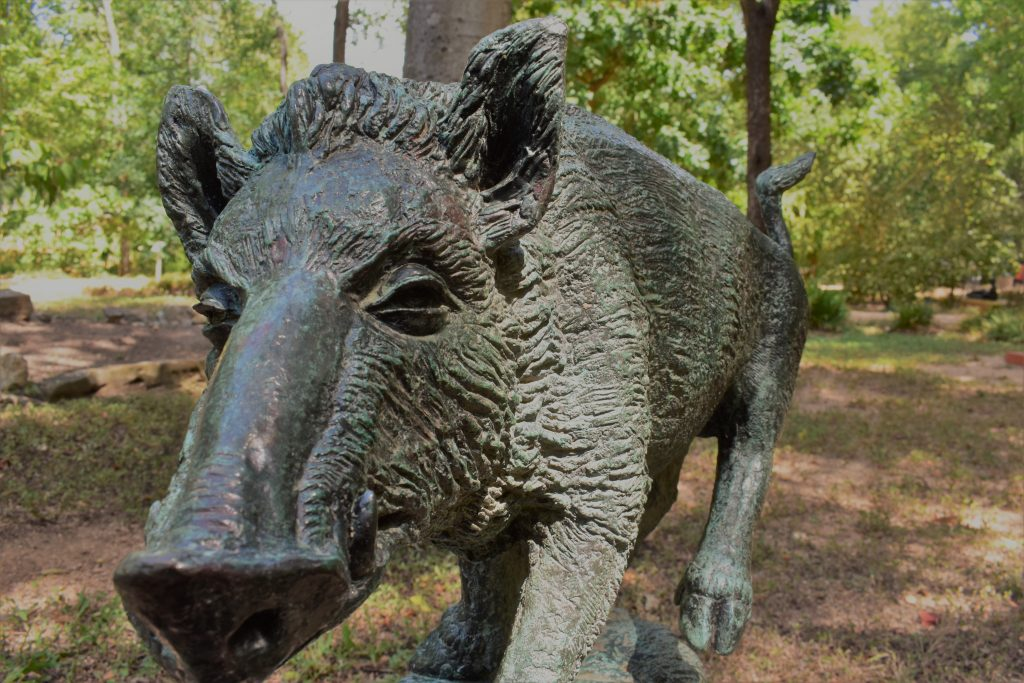 Wild Boar Raised Hair on Touch Tours at Umlauf Sculpture Garden